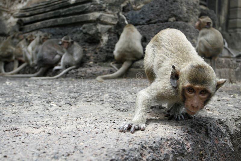 Nieuwsgierige aap stock fotografie