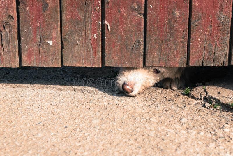 Nieuwsgierige hond royalty-vrije stock foto