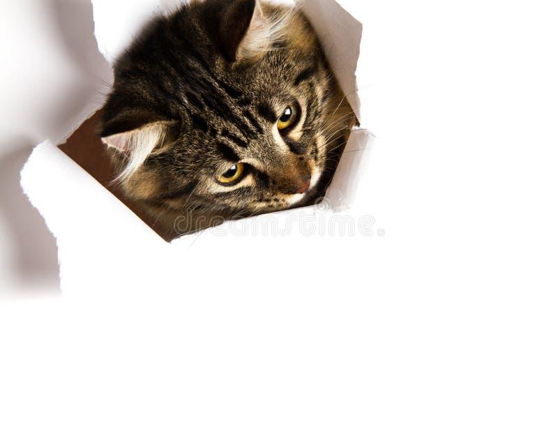 Download Nieuwsgierige kat stock afbeelding. Afbeelding bestaande uit creatief - 54079955