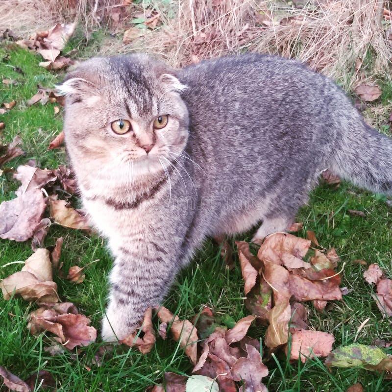 Nieuwsgierige kat royalty-vrije stock foto's