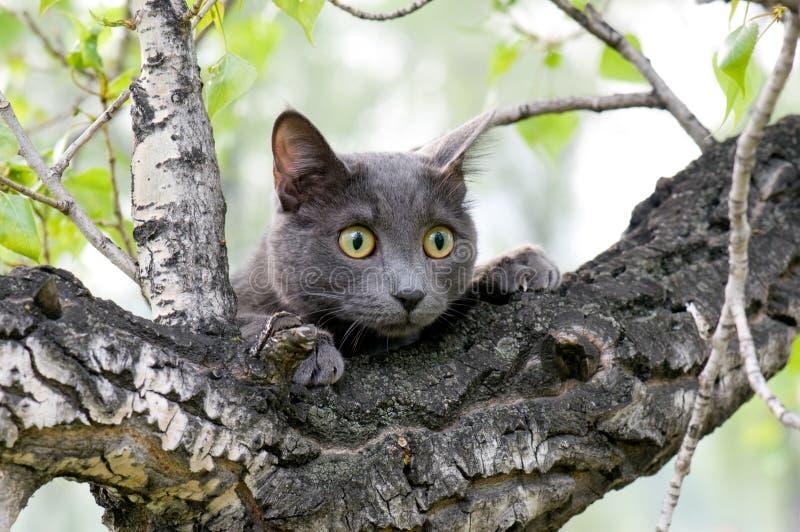 Nieuwsgierige kat op een boom royalty-vrije stock fotografie