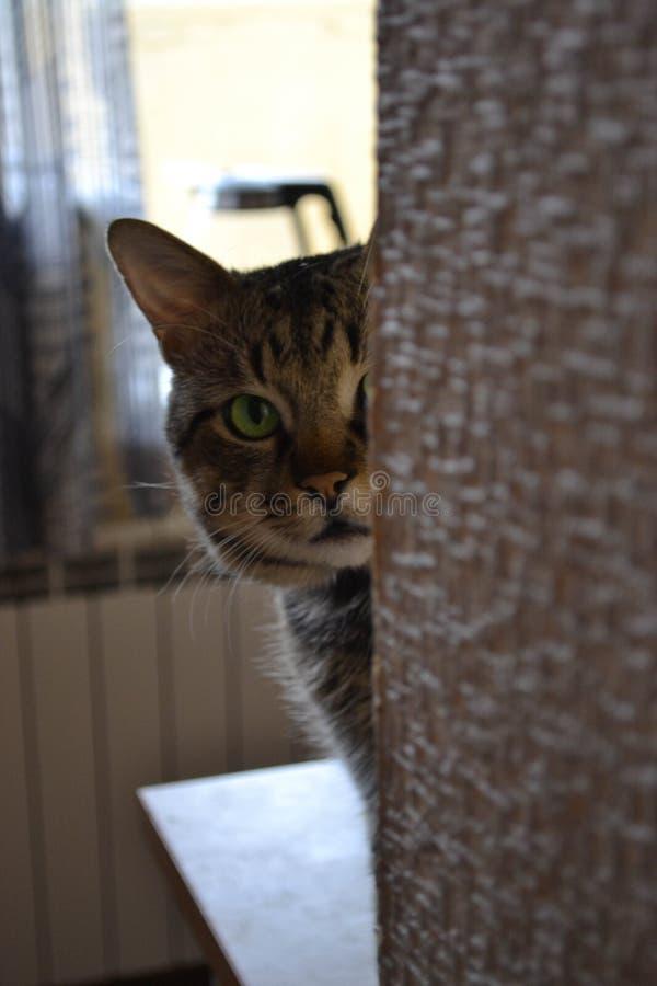Nieuwsgierige kat Timon royalty-vrije stock foto