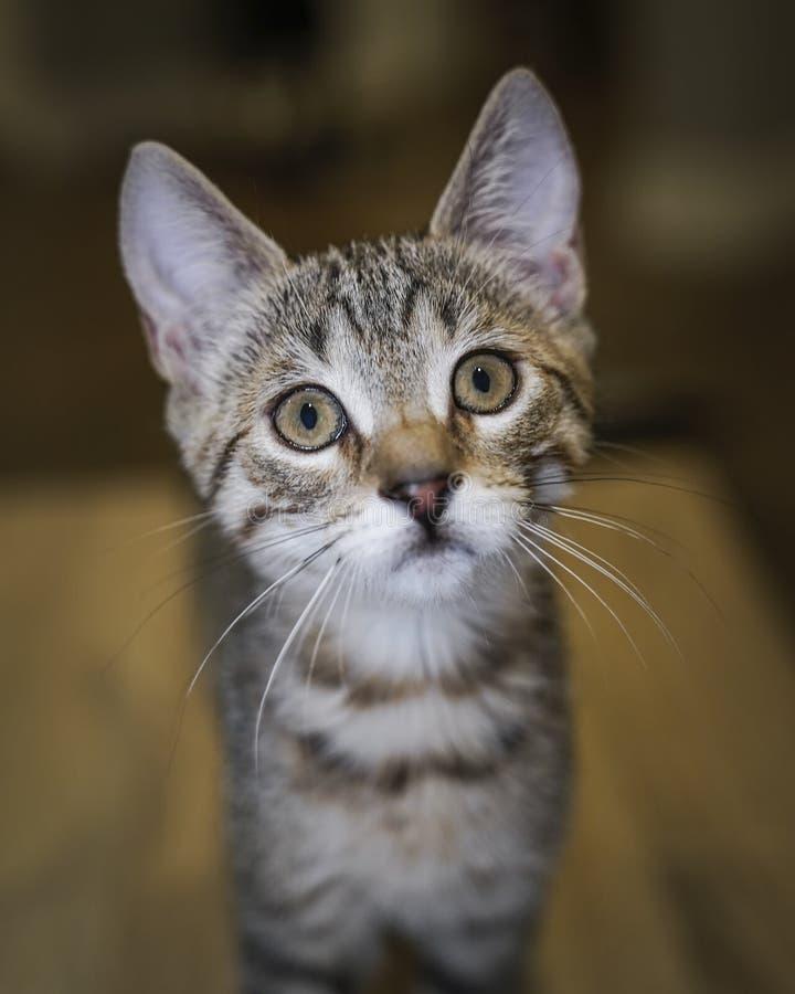 nieuwsgierige kitten royalty-vrije stock foto's