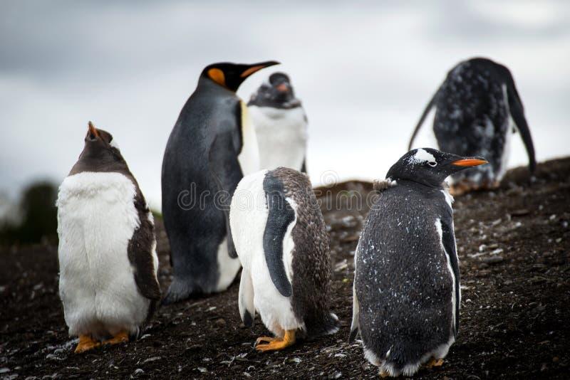 Nieuwsgierige Pinguïnen stock foto's