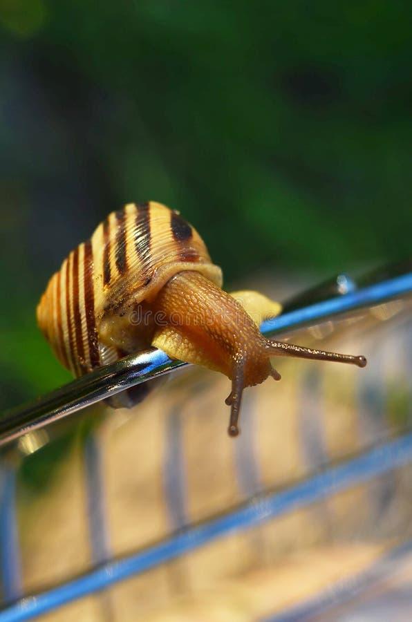 Download Nieuwsgierige slak stock foto. Afbeelding bestaande uit close - 54077236