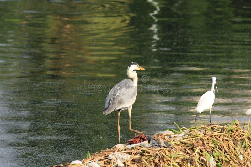 Nieuwsgierige stedelijke vogels in een park stock foto