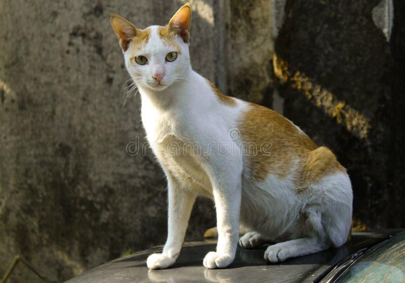 Nieuwsgierige verdwaalde kat royalty-vrije stock afbeelding