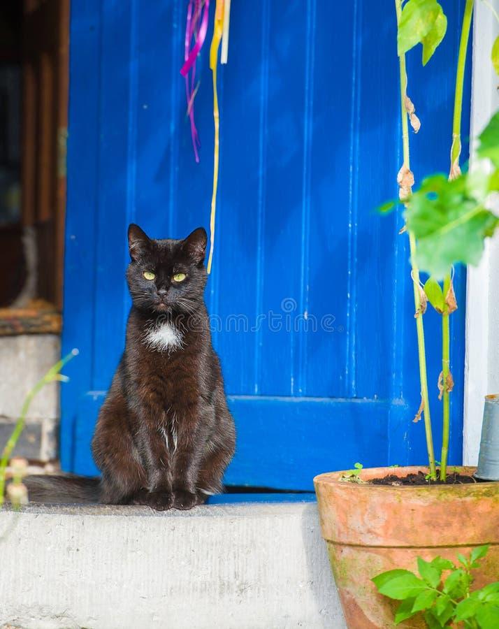 Nieuwsgierige zwarte kat voor blauwe uitstekende deur royalty-vrije stock afbeeldingen