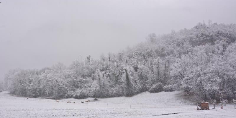 Nieva copioso y el paisaje se convierte en la Navidad imagen de archivo libre de regalías