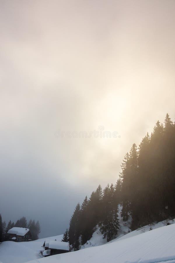 Nieva y el bosque oscuro en las montañas imagen de archivo libre de regalías