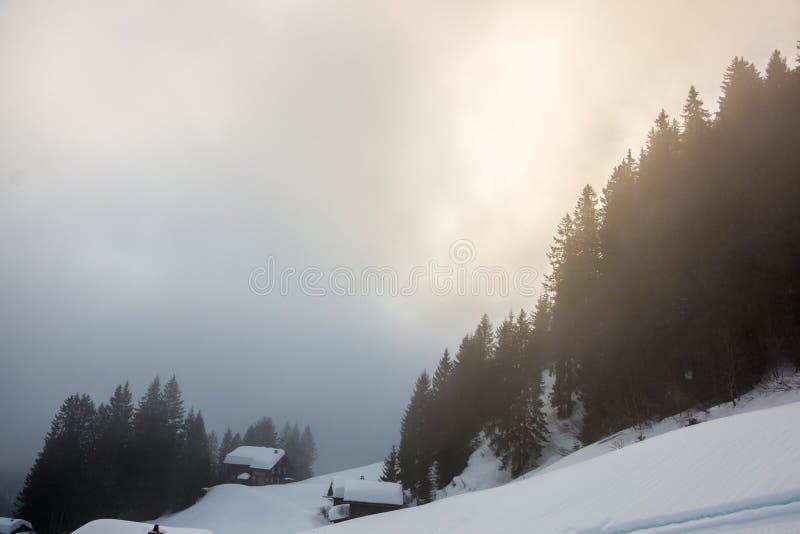 Nieva y el bosque oscuro en las montañas fotografía de archivo libre de regalías