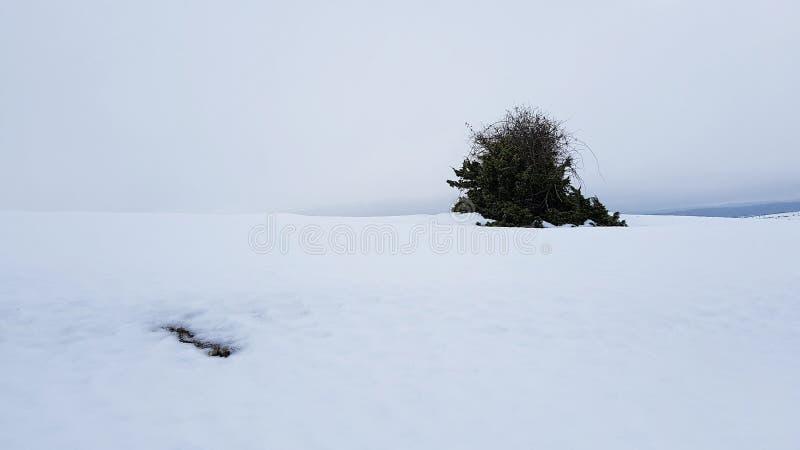 Nieve royaltyfria foton