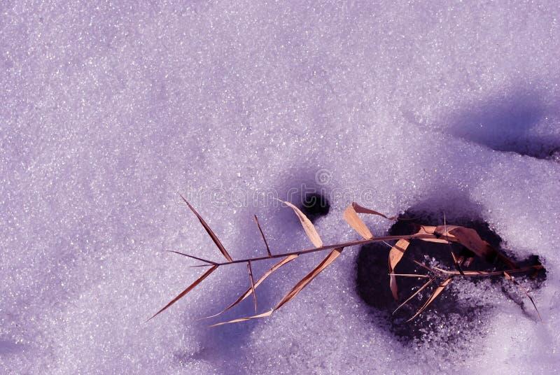 Nieve blanca de la forma de lámina amarilla seca de la ramita, fondo natural imágenes de archivo libres de regalías