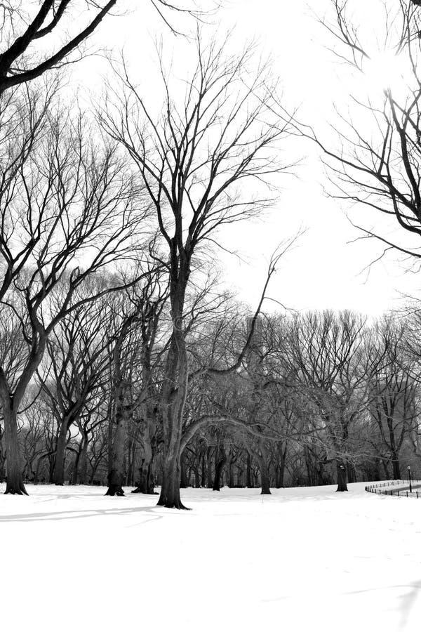 Nieve blanca en Central Park imagenes de archivo