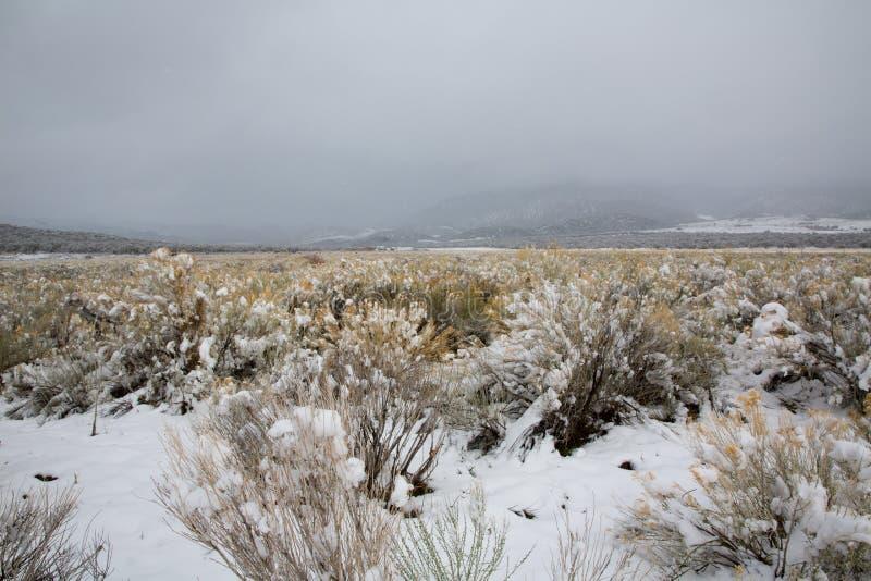 Nieve de la primavera de Nevada los E.E.U.U. en las montañas fotografía de archivo