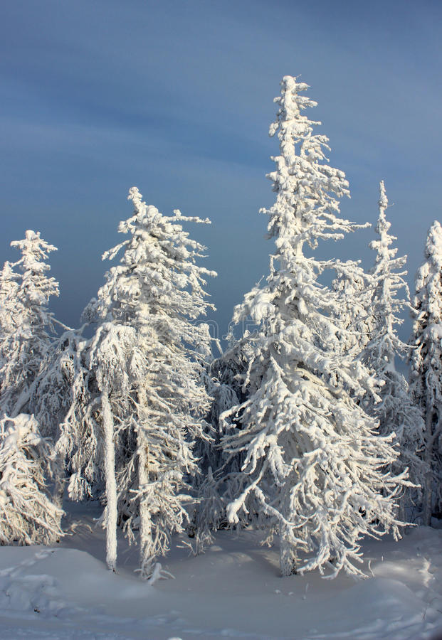Nieve de los árboles imagen de archivo