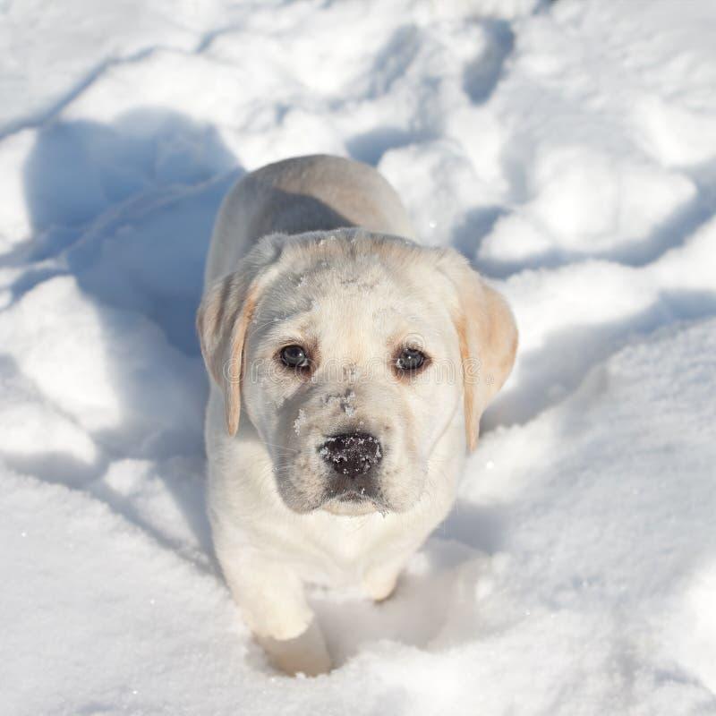 Nieve del perro del invierno imágenes de archivo libres de regalías
