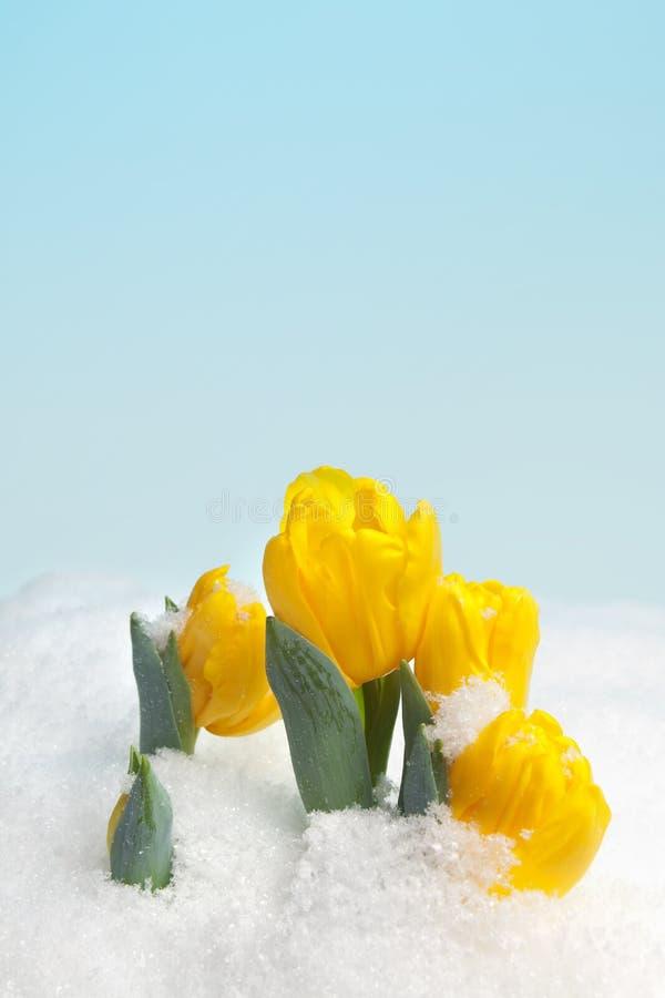 Nieve del resorte imagen de archivo libre de regalías