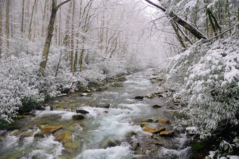 Nieve del resorte en el Smokies imagenes de archivo
