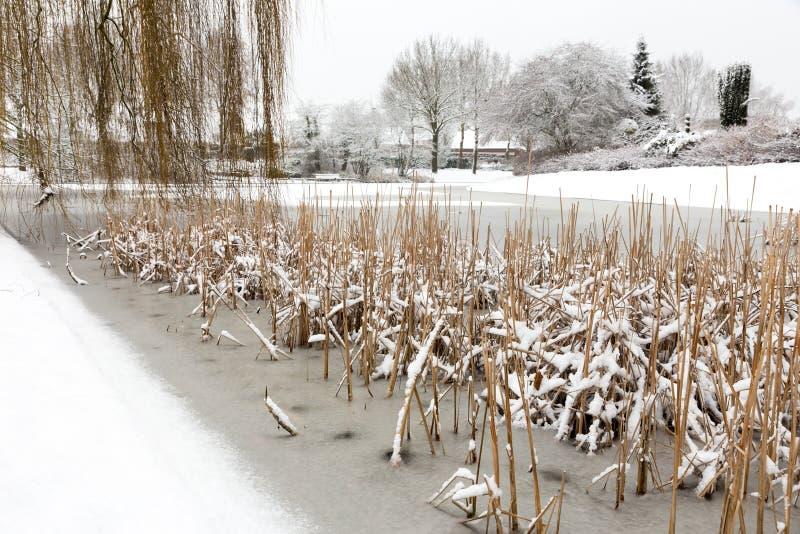Nieve e hielo en el agua de la charca foto de archivo libre de regalías