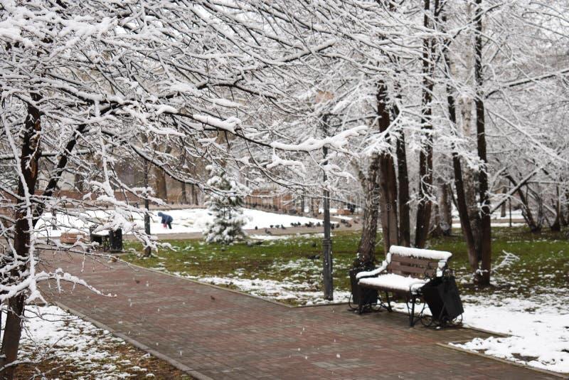 Nieve e hierba en parque foto de archivo libre de regalías