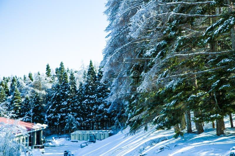 Nieve en árbol imagenes de archivo