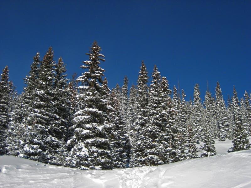 Nieve en árboles imagenes de archivo