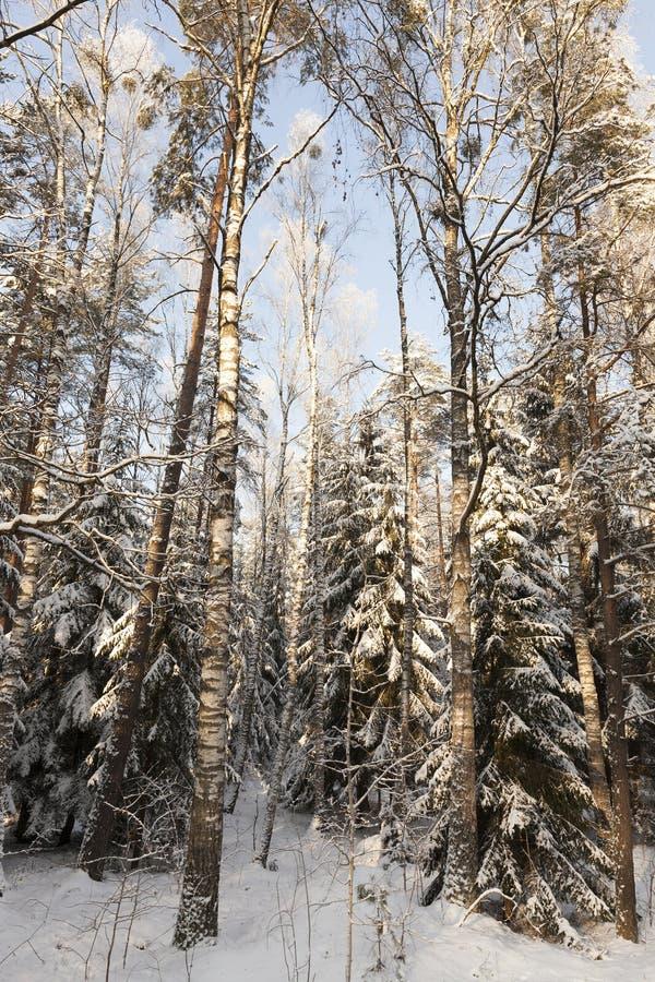 Nieve en bosque fotografía de archivo