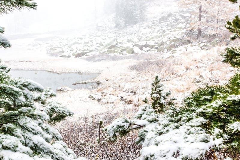 Nieve en bosque conífero fotografía de archivo