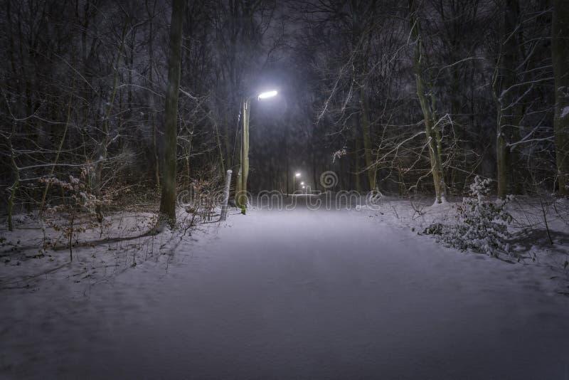 Nieve en bosque en la noche fotos de archivo