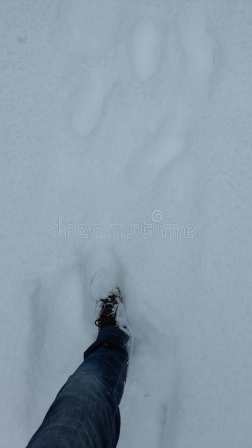 Nieve en Canadá imagen de archivo