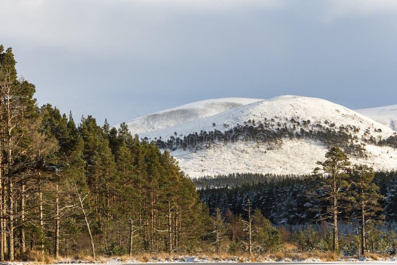 Nieve en Creag Mhigeachaidh en el parque nacional de Cairngorms de Escocia foto de archivo