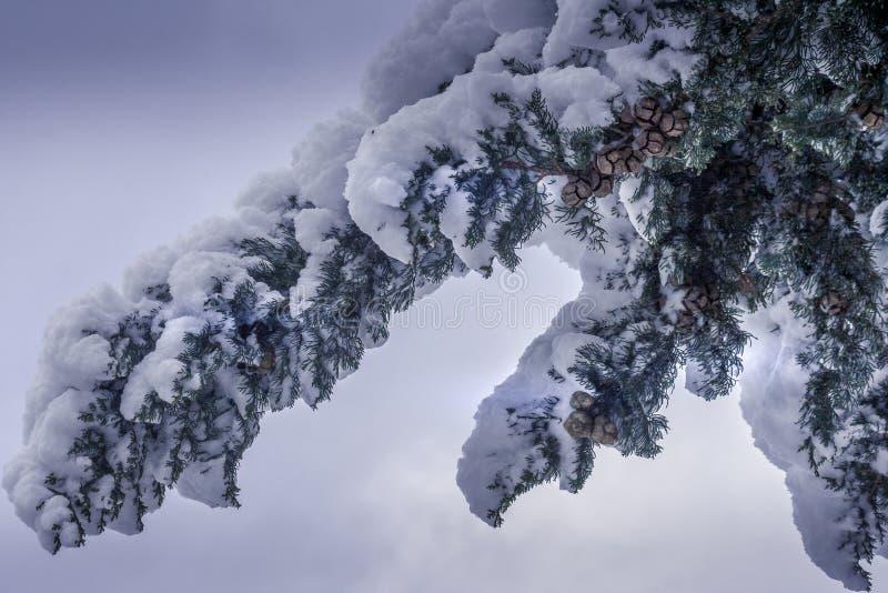 Nieve en el árbol, durante la estación del invierno fotos de archivo