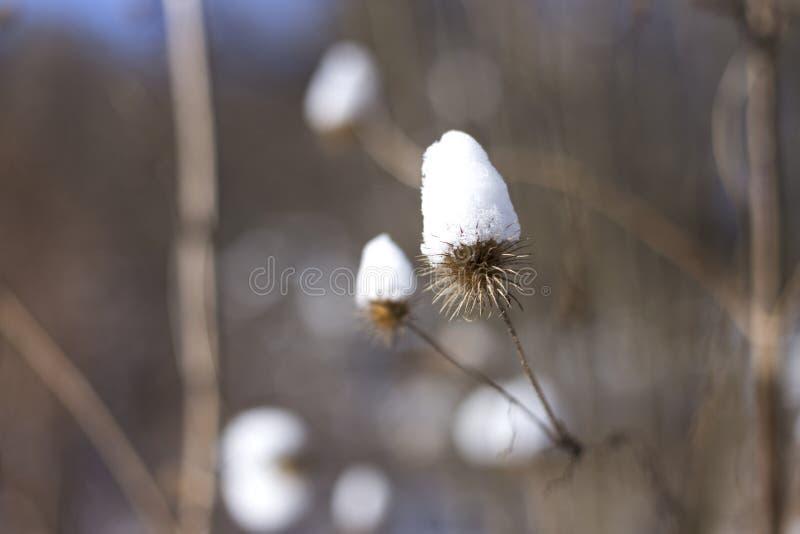 Nieve en el día de invierno feliz soleado brillante del parque La nieve cubre la planta imagenes de archivo