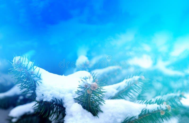 Nieve en el primer del fondo del paisaje del invierno de la picea para la decoración de una tarjeta del día de fiesta foto de archivo