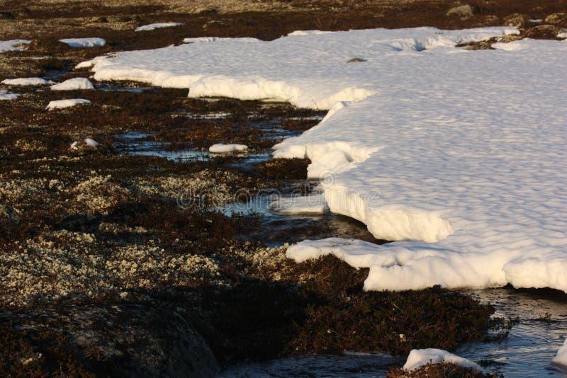 Nieve en la primavera la tundra fotografía de archivo libre de regalías