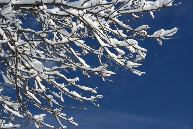 Nieve en la ramificación imagen de archivo