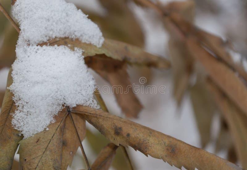 Nieve en las hojas fotos de archivo