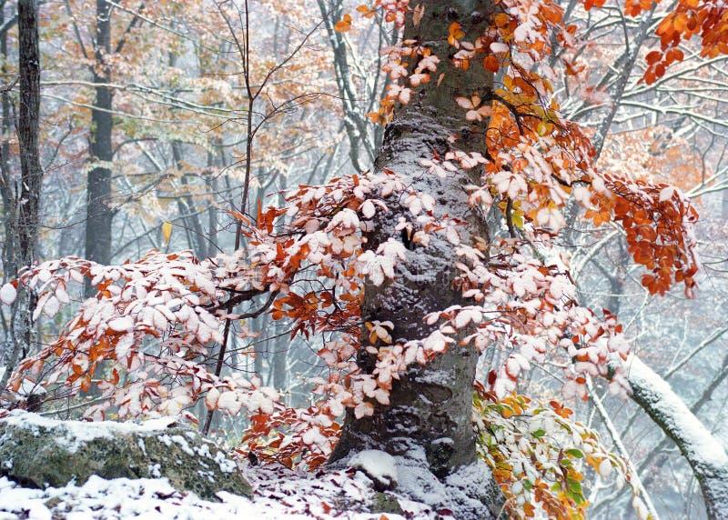 Nieve en las hojas amarillas foto de archivo