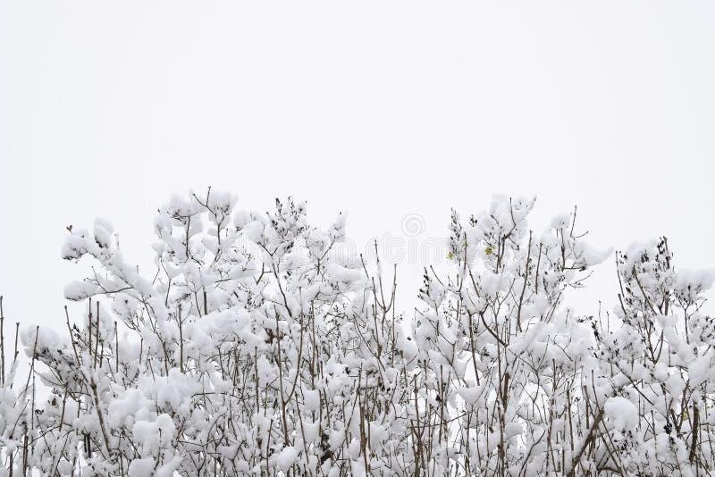 Nieve en las ramas de árbol Opinión del invierno de los árboles cubiertos con nieve La severidad de las ramas debajo de la nieve  imagen de archivo
