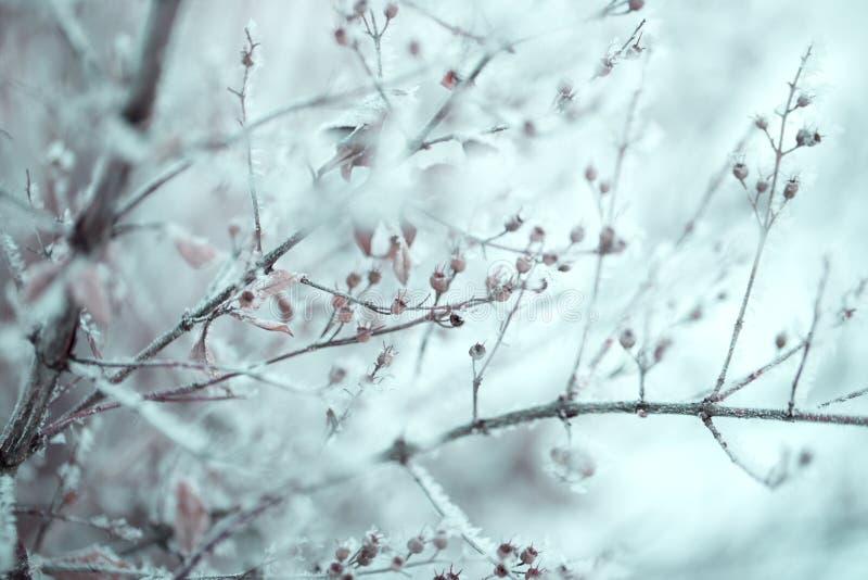 Nieve en las ramas de árbol Opinión del invierno de los árboles cubiertos con nieve foto de archivo libre de regalías