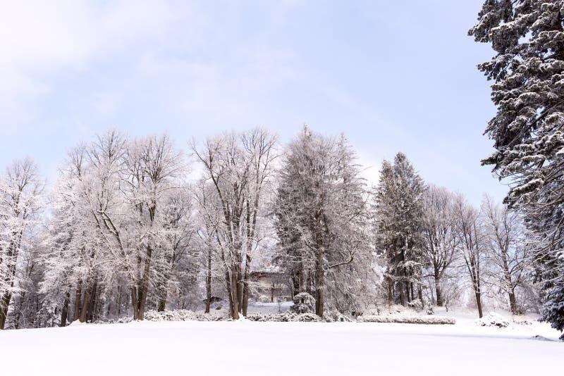 Nieve en las ramas de árbol Opinión del invierno de los árboles cubiertos con nieve La severidad de las ramas debajo de la nieve foto de archivo