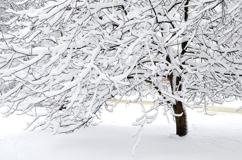 Nieve en las ramas de árbol Paisaje del invierno fotografía de archivo