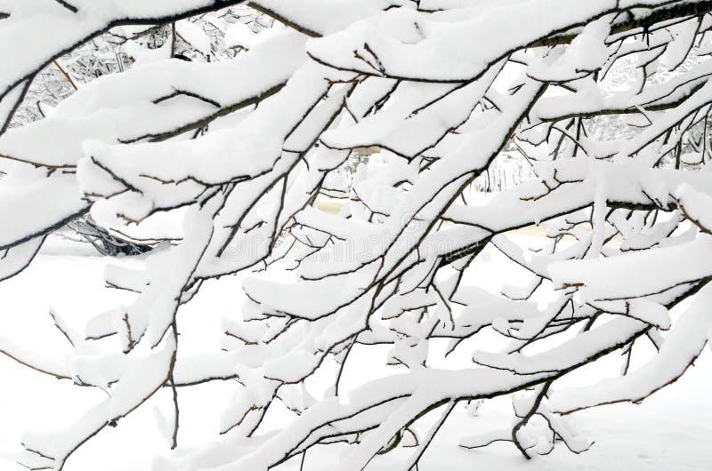 Nieve en las ramas de árbol Paisaje del invierno foto de archivo