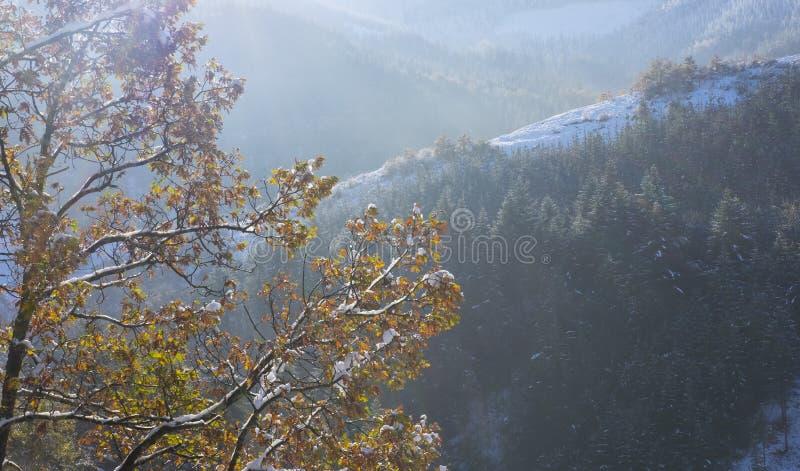 Nieve en las ramas de un roble en el parque natural de Aizkorri - Aratz imagen de archivo