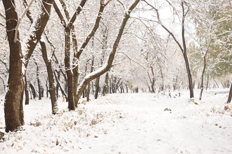 Nieve en los árboles fotografía de archivo