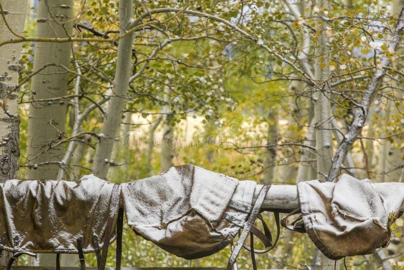 Nieve en los bolsos de la silla de montar, arboleda del álamo temblón de Wyoming imágenes de archivo libres de regalías