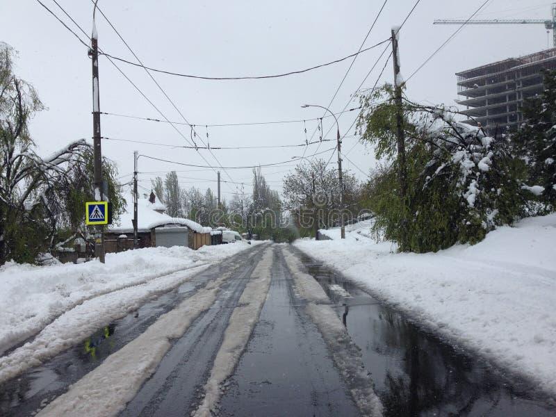 Nieve en mayo foto de archivo