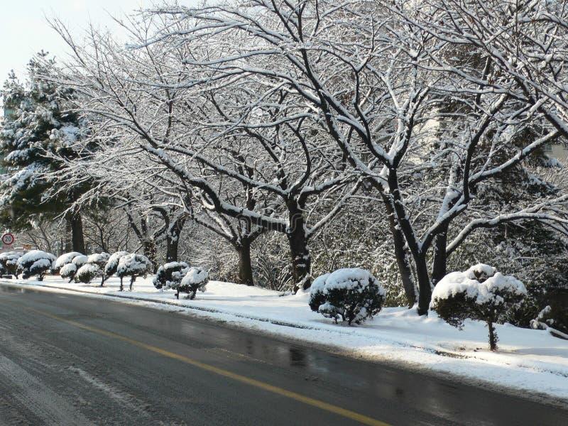 Nieve en ramificaciones fotografía de archivo libre de regalías