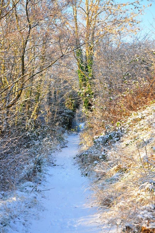 Nieve en un camino de bosque fotografía de archivo libre de regalías